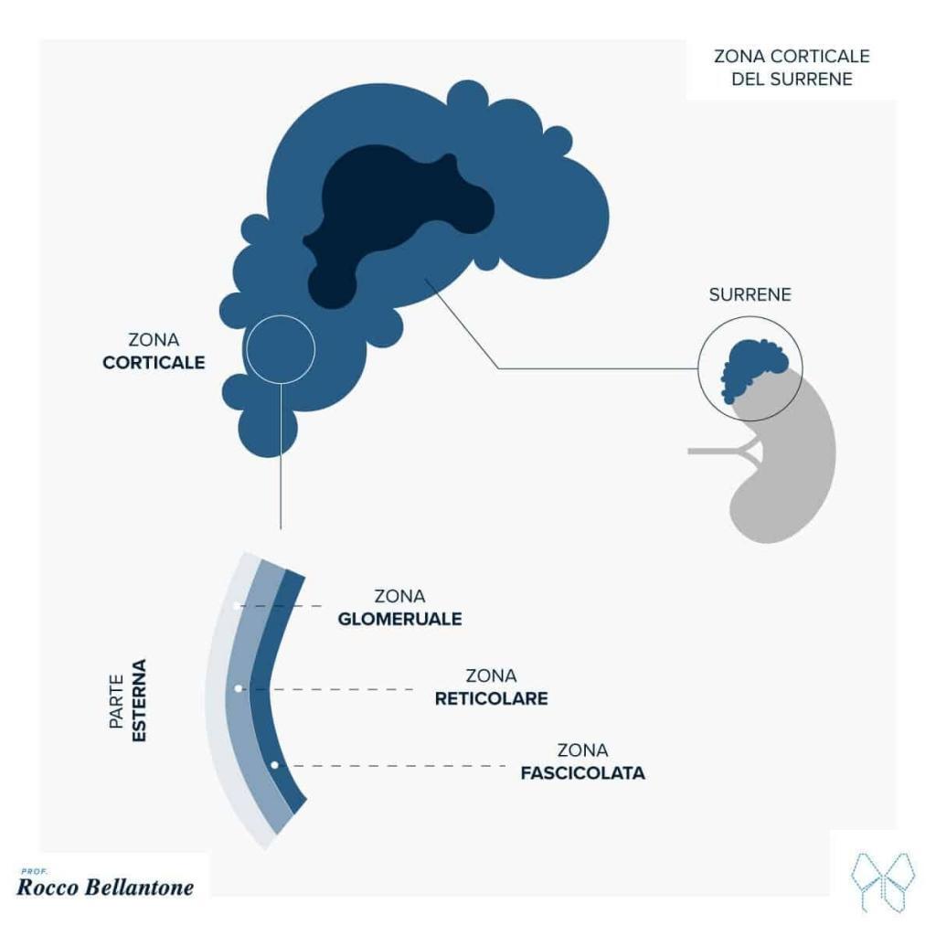 corticale del surrene